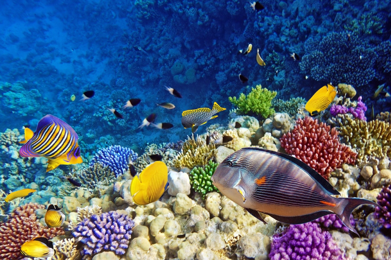 UN to Meet in Sharm El Sheikh to Discuss Biodiversity Threats - Qahwet Masr